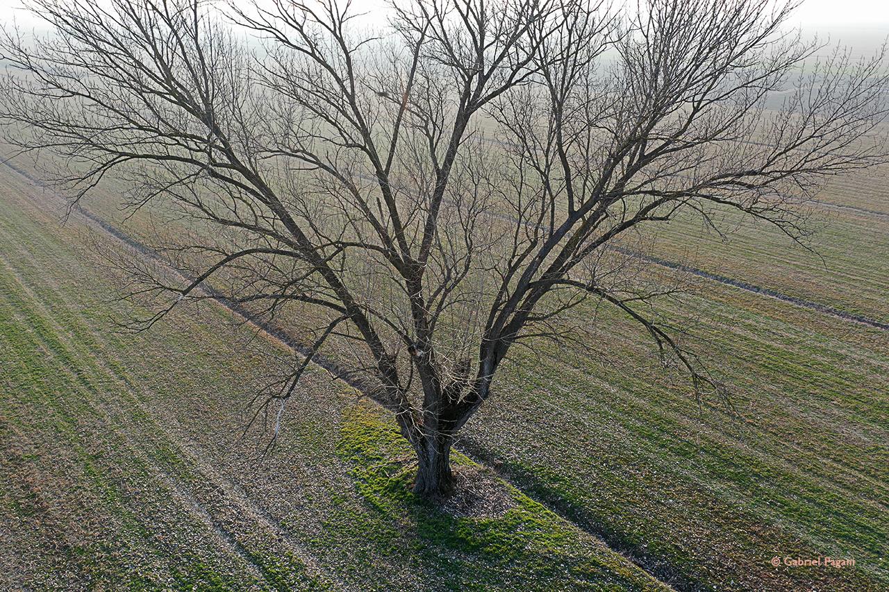 foto da drone, albero d'autunno