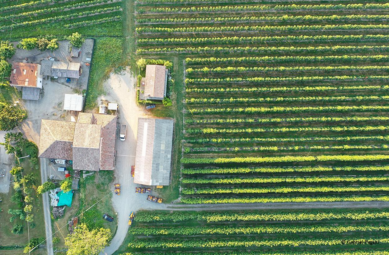 Ciliegie di Vignola, Foto da drone, Emilia, pattern, Filari